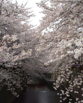 2007年4月1日花見004_edited.JPG